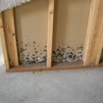mold on wall_accutest article
